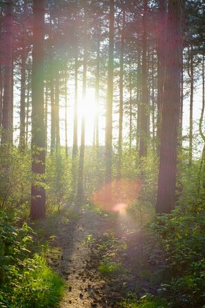 Beautiful morning sun rays going trough the forest, with the light breaking through the tree branches, creating the perfect moment to hike trough the woods