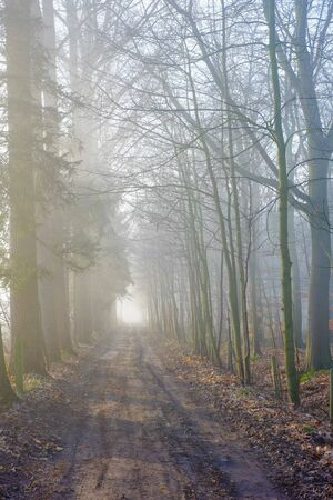 Road through a mysterious dark forest in fog with green leaves on a Spring morning with the sun rising, creating a Magical atmosphere as in a Fairytale