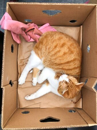 Ginger cat lies sleeping in a cardboard box Zdjęcie Seryjne