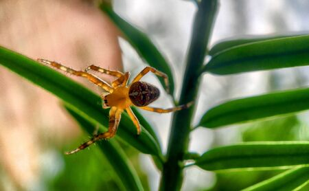 Macro photo of a spider hunting at its web in the garden Banco de Imagens