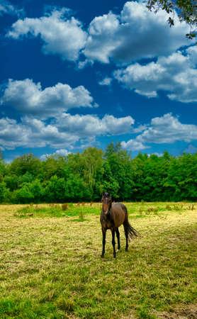 A horse grazing on a lush green field. High quality photo 版權商用圖片
