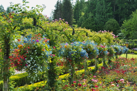 victoria bc: Hanging flower baskets in the Butchart Gardens in Victoria BC,Canada