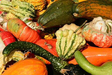 gourds: Ornamental pumpkins,gourds and squash on display.