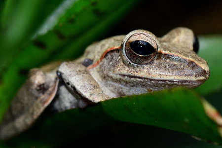 cold blooded: Crested gecko looks on as it relaxes in the gardens. Stock Photo