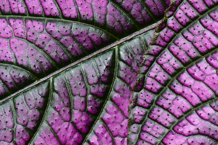 moguls: Abstract purple plant leaf