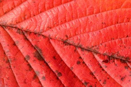 Pretty detailed plant leaf. Stok Fotoğraf