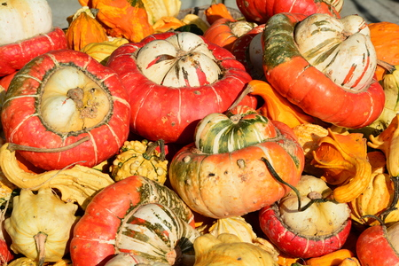 pumpkins gourds: Pumpkins gourds and squashes on display at the market.