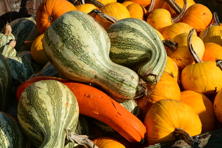 farm market: Pumpkins and gourds on display at the farm market.
