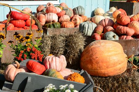 the sizes: Variety of pumpkin shapes and sizes at the market. Stock Photo