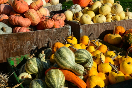 gourds: Pumpkins gourds and squashes on display at the farm market.
