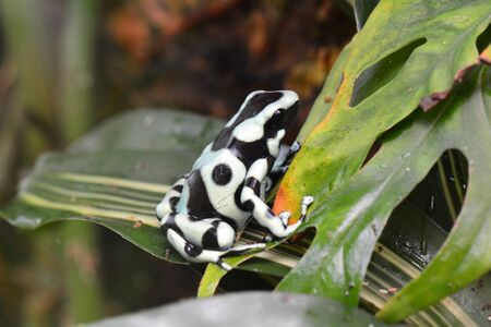 poison dart frogs: A poison dart frog sits on a plant in the gardens.