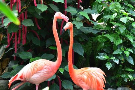A pair of pink flamingos