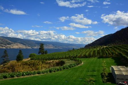 Vineyards and vines of the Okanagan Valley at Kelowna
