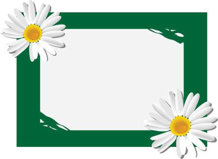 The form for the letter with camomiles. A vector illustration. It is isolated on a white background. Illustration