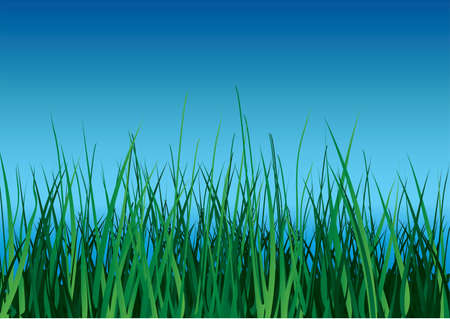 Green grass on blue sky background. Vector illustration. Stock Vector - 3263393