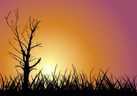 Tree outline on sunset background. Vector illustration. Stock Vector - 3275185