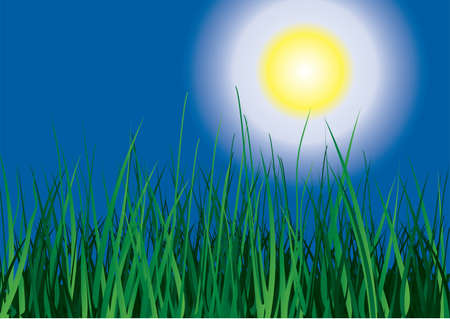 Green grass on sun sky background. Vector illustration. Stock Vector - 3497320