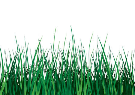 Green grass on white background. Vector illustration. Isolated. Illustration