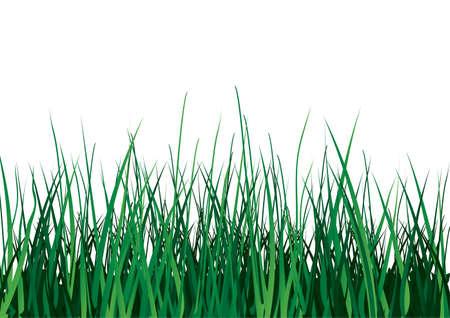 Green grass on white background. Vector illustration. Isolated. Illustration