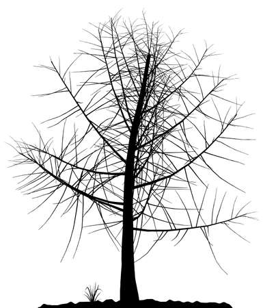 High detailed tree silhouette on white background. Black-And-White contour for your design. Vector illustration. Stock Vector - 3858352