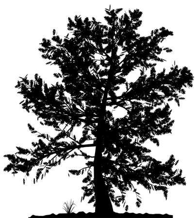 Arborescence détaillée haute silhouette sur fond blanc. Black-And-White contour de votre conception. Illustration vectorielle.