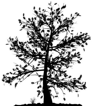 High detailed tree silhouette on white background. Black-And-White contour for your design. Vector illustration. Stock Vector - 3891473