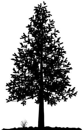 High detailed tree silhouette on white background. Black-And-White contour for your design. Vector illustration. Stock Vector - 3891475