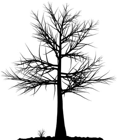 High detailed tree silhouette on white background. Black-And-White contour for your design. Vector illustration. Stock Vector - 3895107