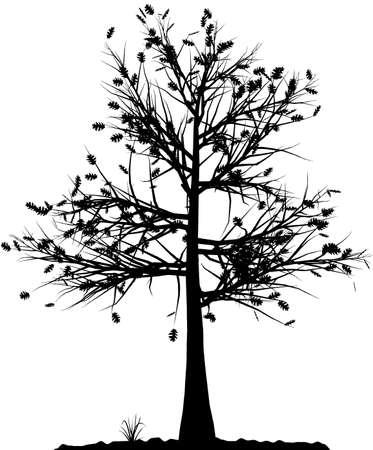 marco blanco y negro: Alta silueta �rbol detallado sobre fondo blanco. En blanco y negro el contorno de su dise�o. Ilustraci�n vectorial.