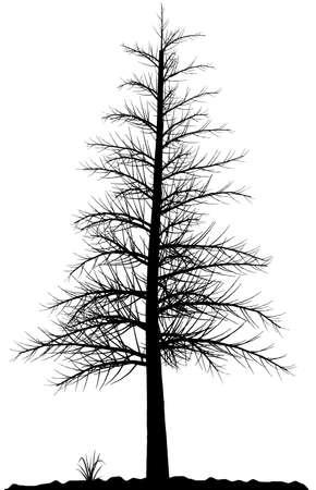 dead trees: Alta silueta �rbol detallado sobre fondo blanco. En blanco y negro el contorno de su dise�o. Ilustraci�n vectorial.