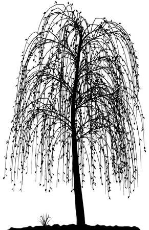 Arborescence détaillée haute silhouette sur fond blanc. Black-And-White contour de votre conception. Illustration vectorielle. Banque d'images - 4139014