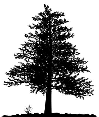 High detailed tree silhouette on white background. Black-And-White contour for your design. Vector illustration. Stock Illustration - 4138965