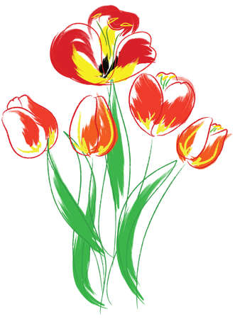 white tulip: Tulips bouquet. Water-color simulate. Vector illustration.  Illustration