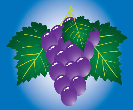 purple grapes: Purple grape on blue background. Vector illustration.