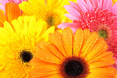 Abstract background of pink and orange flowers with dew. Close-up. photo