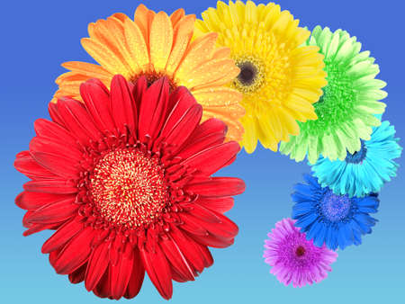 Rainbow of flowers on blue-sky background. Close-up. Stock Photo - 7147992