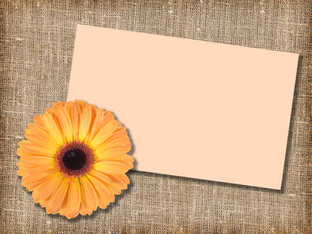 One orange flower with message-card on  textile background. Close-up. Studio photography. photo