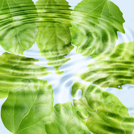 Abstract background of a green leaf under blue water. Close-up.