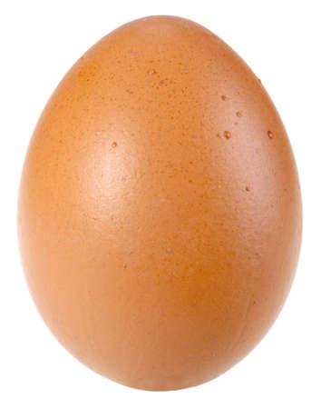 origen animal: Sólo ave marrón único huevo. Aislados sobre fondo blanco.