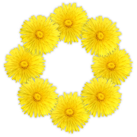 Frame as ring of yellow flowers on white background. Close-up.   photo