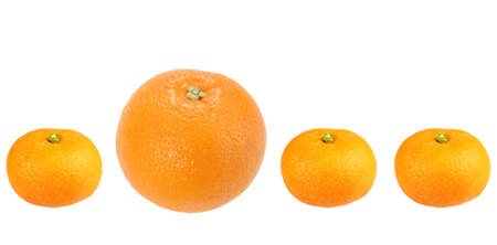 Orange and tangerine in row. Isolated on white background. Close-up.  photo