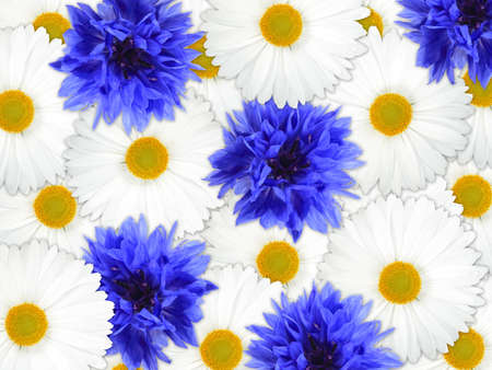 Abstract background of blue and white flowers for your design. Close-up. Studio photography. Stock Photo - 12376489