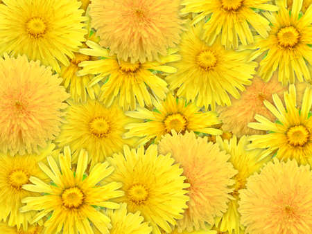 Abstract background of yelow flowers for your design. Close-up. Studio photography. Stock Photo - 12376488