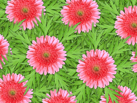 Abstract background of pink flowers with dew and green leaf for your design. Close-up. Studio photography. Stock Photo - 12376460