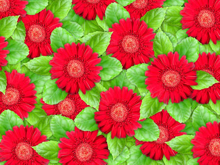 Abstract background of red flowers and green leaf for your design. Close-up. Studio photography. Stock Photo - 12376465