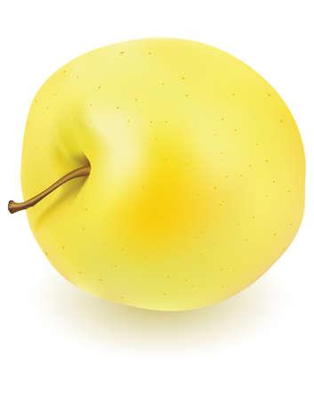 yellow apple: One fresh yellow apple on white background  Illustration