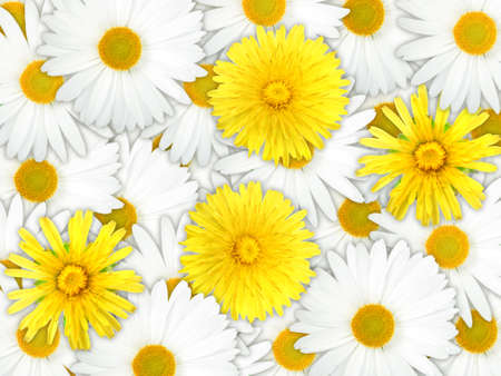 Abstract background of yellow and white flowers for your design. Close-up. Studio photography. Stock Photo - 13451228