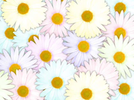 Abstract background of motley flowers for your design. Close-up. Studio photography. Stock Photo - 13451220