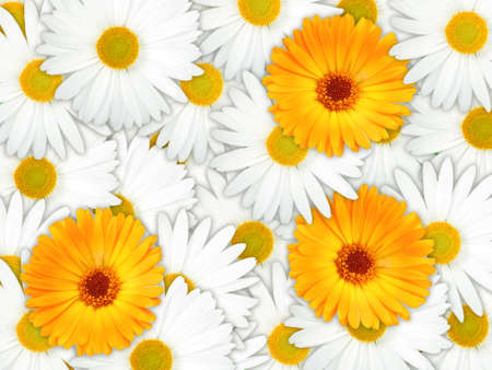 Abstract background of orange and white flowers for your design. Close-up. Studio photography. Stock Photo - 13451227