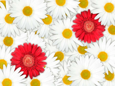 Abstract background of red and white flowers for your design. Close-up. Studio photography. Stock Photo - 13451236